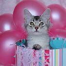 Birthday Surprise! by sarahnewton