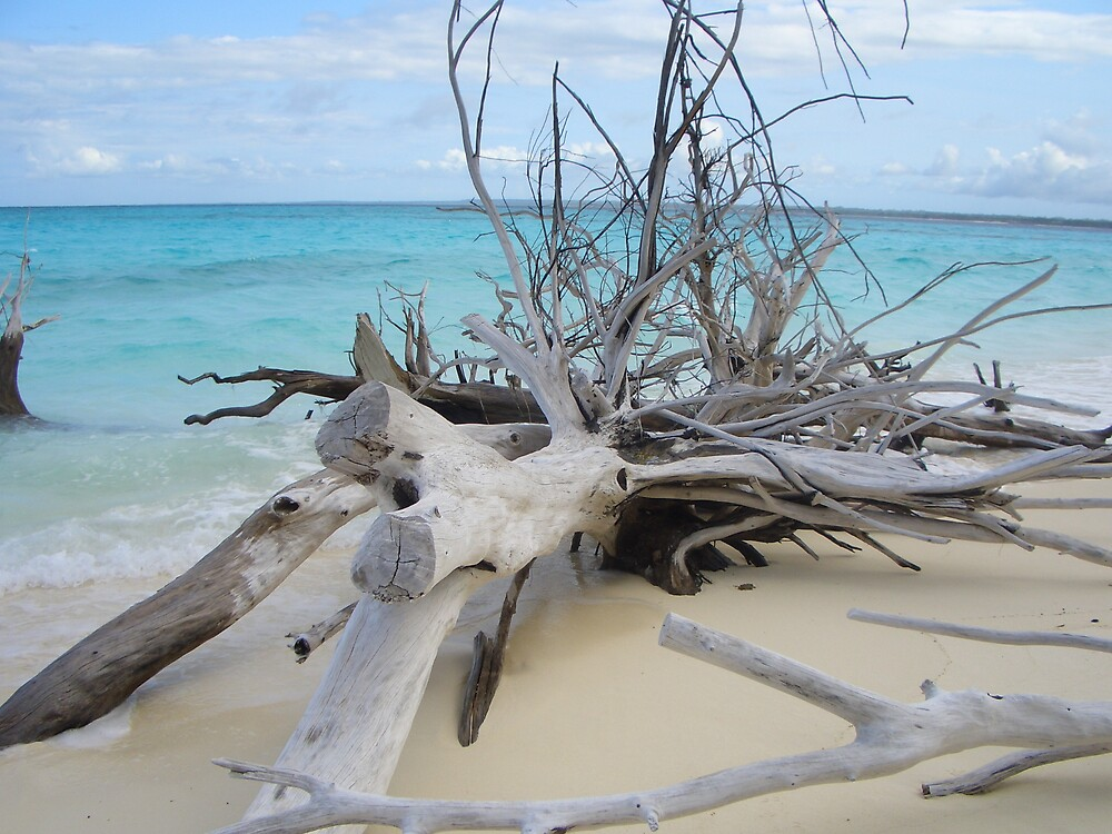 driftwood by Charles  Griffiths