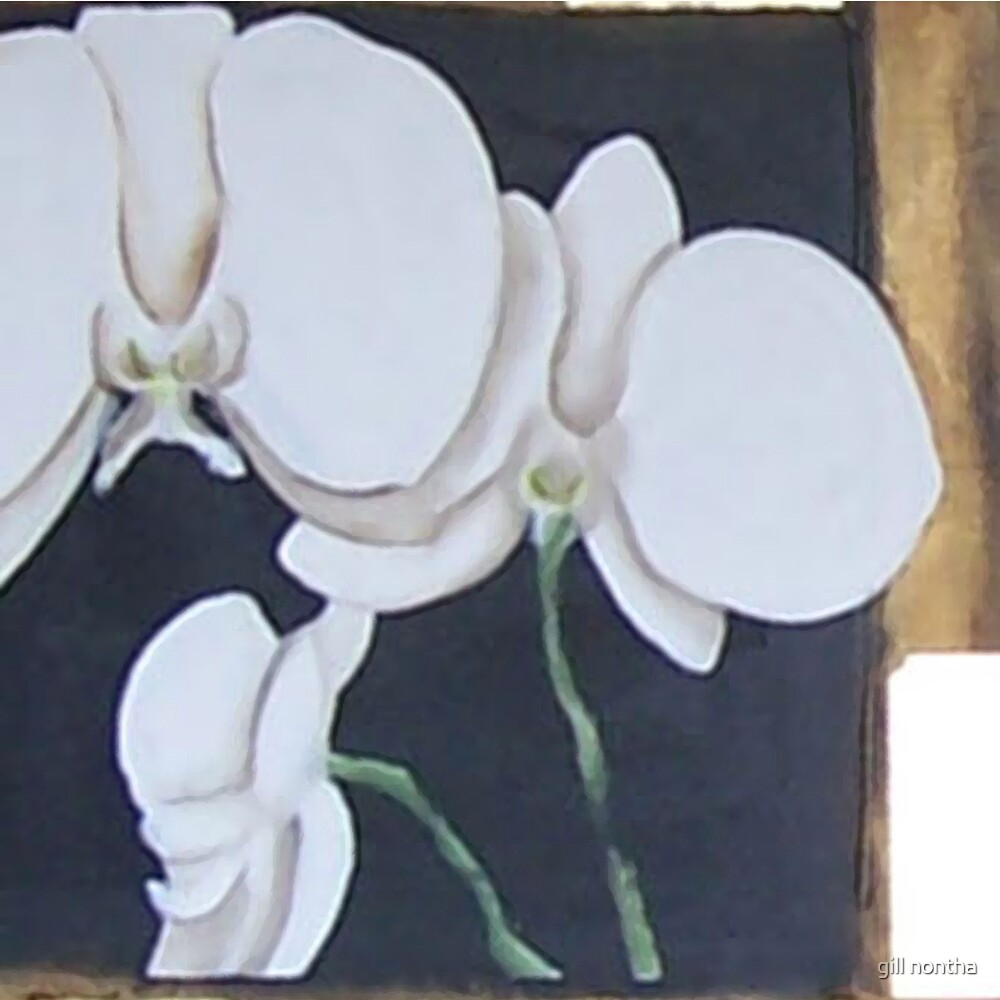 orchids by gill nontha