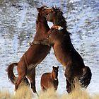 Rivalry by Gene Praag