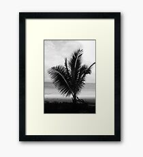 Palme Fidschi gerahmter Druck Gerahmtes Wandbild