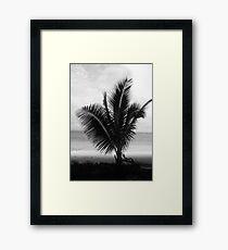 Lámina enmarcada Palm Tree Fiji Lámina enmarcada