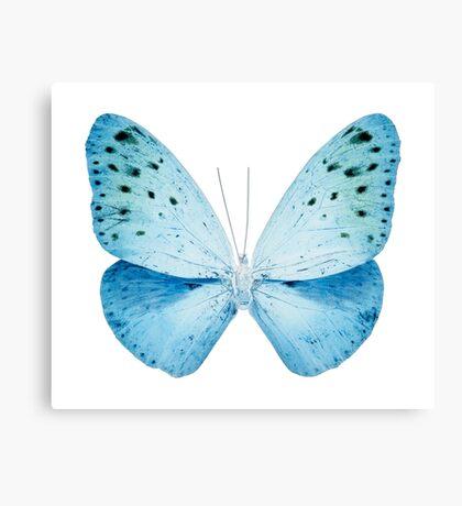MISS BUTTERFLY EUPLOEA X-RAY White Edition Canvas Print