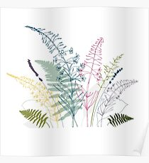 Meadow plants and flowers botanical illustration Poster
