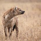 Spotted Hyena by Scott Carr