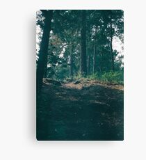 Pathway through the Forest Canvas Print