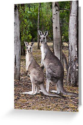 Kangaroos by Dog Shop