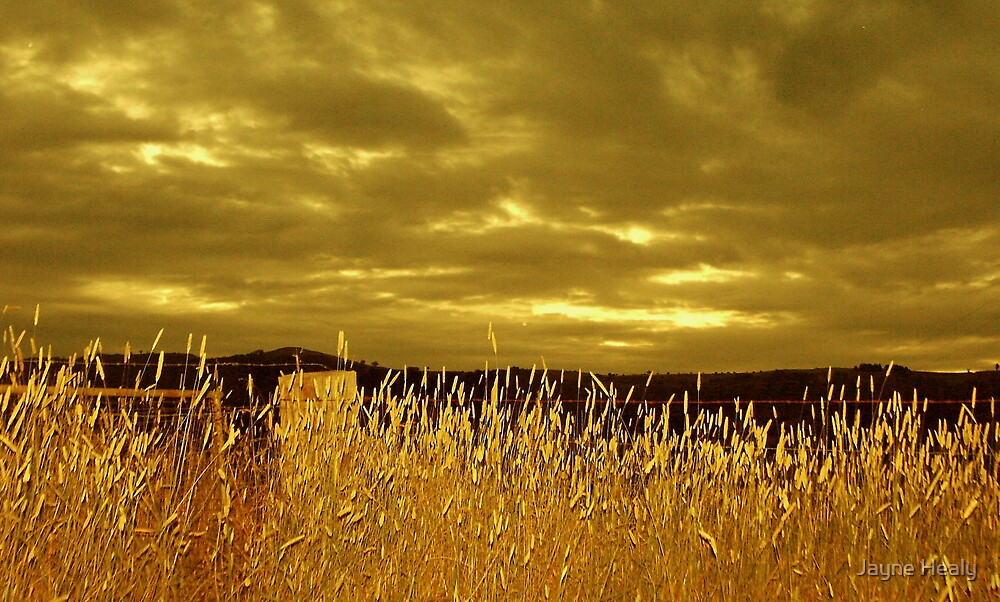 'Harvest' by Jayne Healy