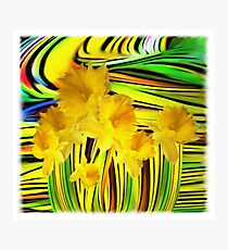Daffodils Gone Wild Photographic Print