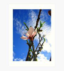 Peach Flower Art Print