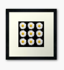 Nine Common Daisies Isolated on A Black Background Framed Print