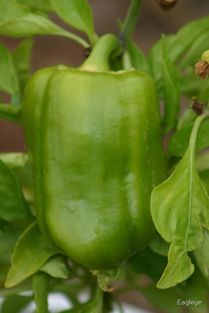 Bell Pepper by Eagleye