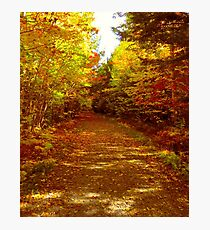 A Walk With Nature Photographic Print