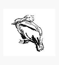 Pelican. Ink sketch. Photographic Print