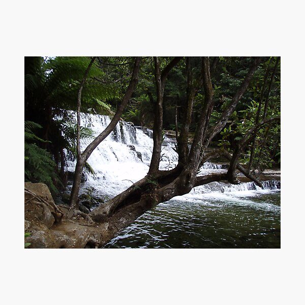 first cascades at Liffey Falls  Photographic Print