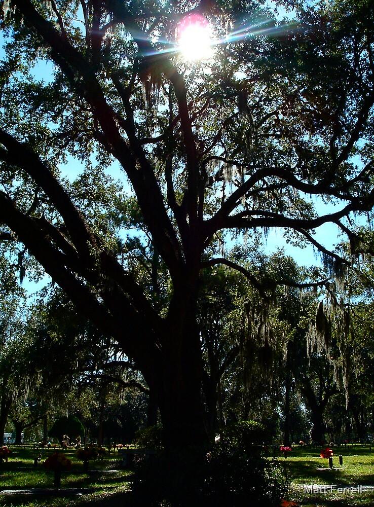 Sun through the tree by Matt Ferrell