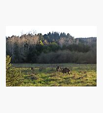 Henry Cowell Redwoods State Park, Felton, California Photographic Print