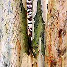 Possum Superhighway by Shelley Heath