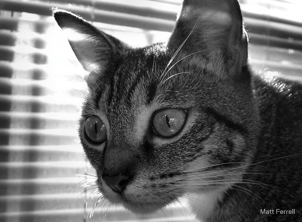 Cat by Matt Ferrell