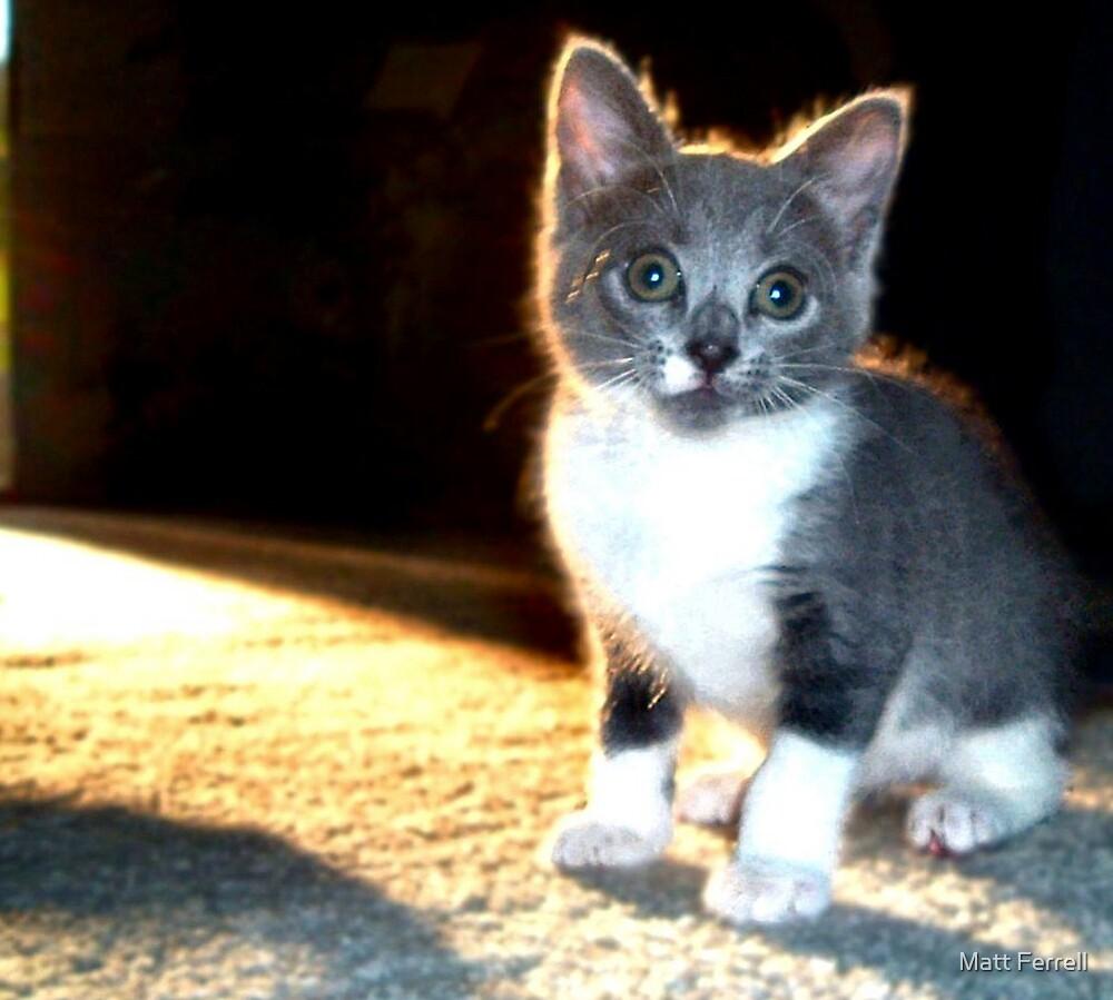 Kitten by Matt Ferrell