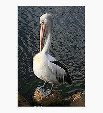 Pelican Preen II Photographic Print