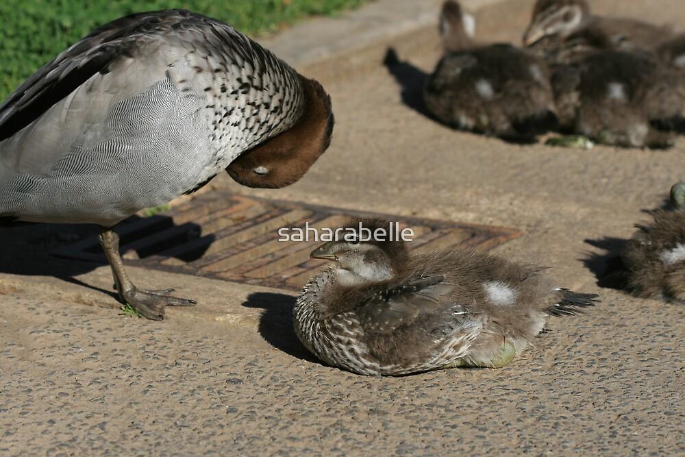 Duck Mum by saharabelle