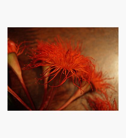 Burnt Orange Photographic Print