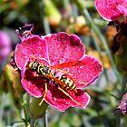 A Hornet At Work by WildestArt