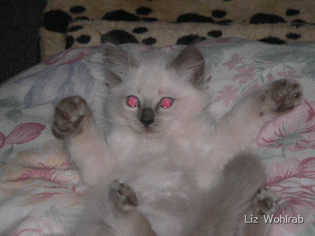 Kitten at Play by Liz  Wohlrab