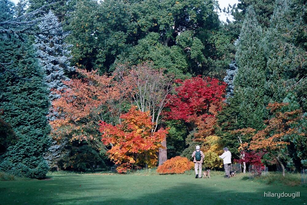 Autumn trees by hilarydougill