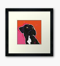 British Black Labrador Friendly Dog Portrait Framed Print