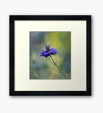 Blue Love in the Mist Framed Print