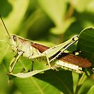 Grasshopper by Terry Best