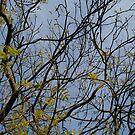 Autumn tree by Sue Hammond