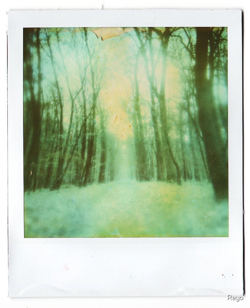 Winter by Reyo