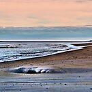 Surprise Beach by Riggzy