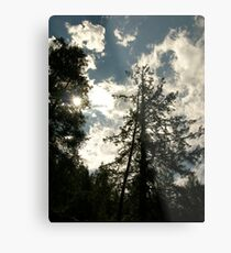 Magestic Pines Metal Print