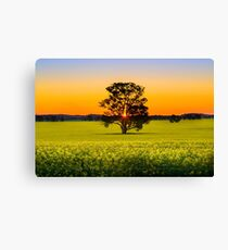 Canola Sunset Canvas Print
