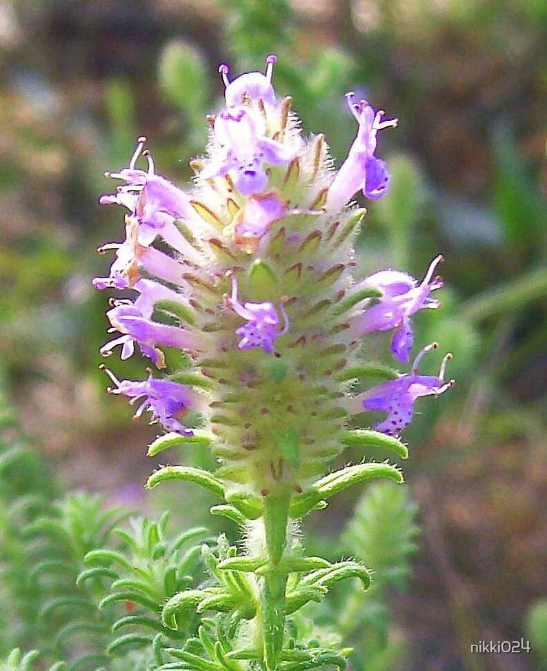 LITTLE FLOWER by nikki024