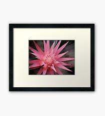 pink furry Framed Print