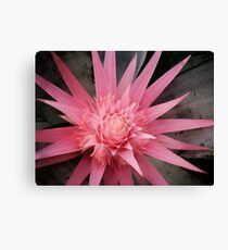 pink furry Canvas Print