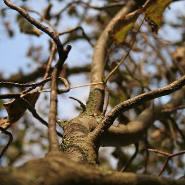 A Branch in Autumn by lewispackman