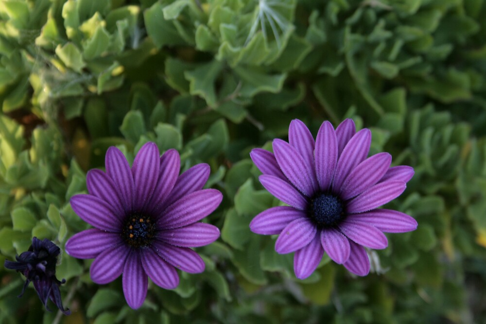 purple striped flowers  by veins