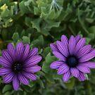 purple striped flowers  by veins