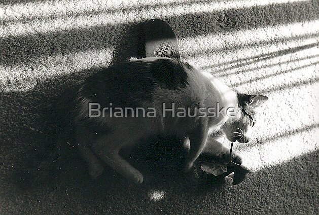 Trouble by Brianna Hausske