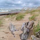 Windy Day On Lake Michigan by Brion Marcum