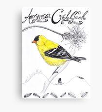 American Goldfinch Canvas Print