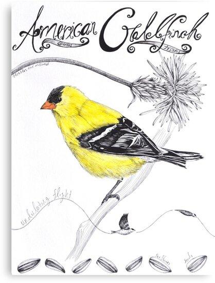 American Goldfinch by maggiewarren