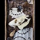Tarot of Bones - Hierophant by TheGreenWolf