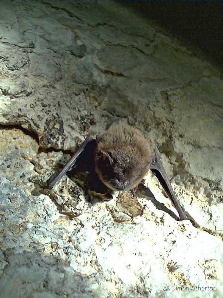 Ghost Bat by Simon Atherton